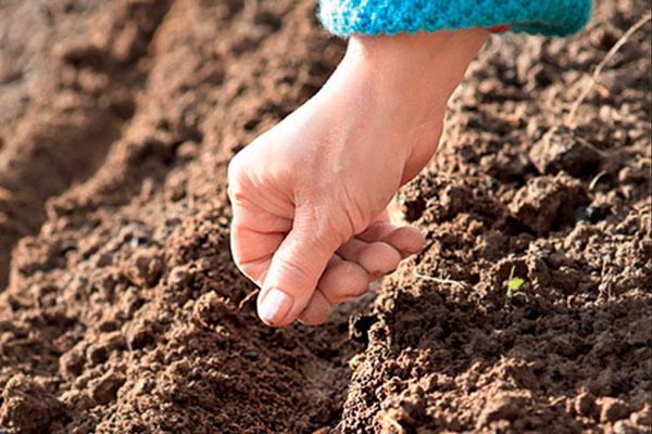 Ошибки новичков при посеве семян в почву