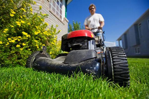Засохшая трава на газоне