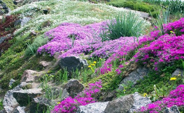 Какие растения подходят для альпийской горки