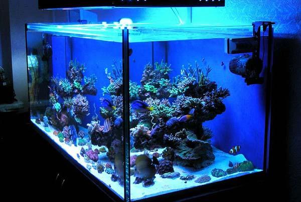 Какое освещение выбрать для аквариума