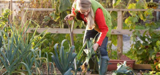 Осенние хлопаты садовода и огородника в сентябре